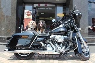 オートバイの写真・画像素材[3319185]