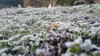 霜のある風景の写真・画像素材[3423144]