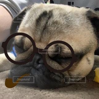 犬が寝ているの写真・画像素材[3316847]