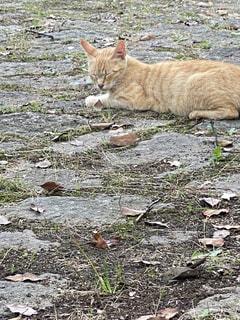 地面に横たわっている猫の写真・画像素材[3353051]