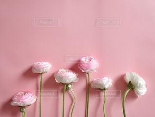 ピンクの花の写真・画像素材[3318793]