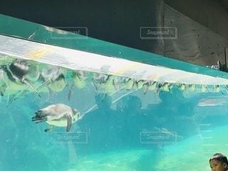 水のプールの中にカモメの群れの写真・画像素材[3318115]