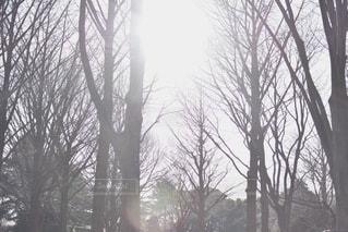 木漏れ日の写真・画像素材[3330833]