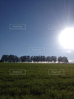 自然の写真・画像素材[139489]