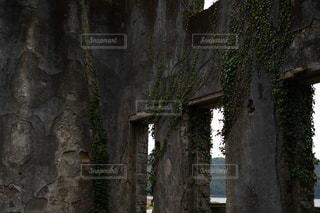 木のクローズアップの写真・画像素材[3328292]