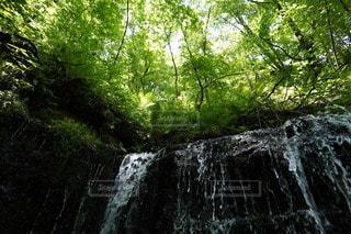 森の中の大きな滝の写真・画像素材[3328296]