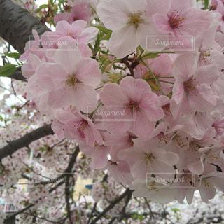 花の写真・画像素材[139539]