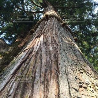 神様の木の写真・画像素材[3331118]