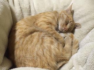 猫の写真・画像素材[139701]