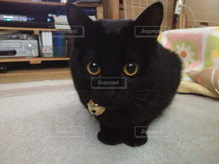 猫三昧の写真・画像素材[139735]