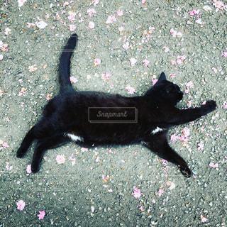 猫の写真・画像素材[139757]