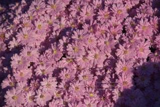 花の写真・画像素材[139867]