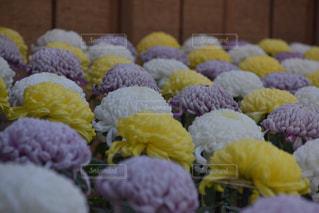 花の写真・画像素材[139868]