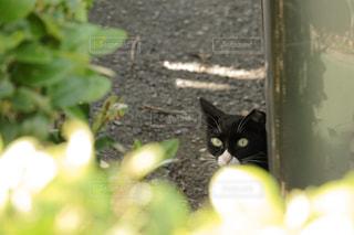 猫🐈 - No.987844