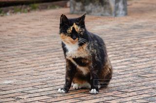 歩道の上に座って猫 - No.991881