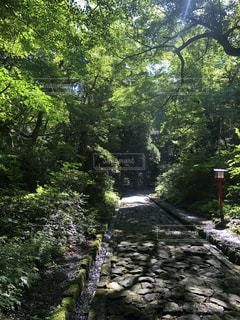 森の中の木の写真・画像素材[3346057]