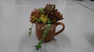 コーヒーカップに寄植えした多肉植物の写真・画像素材[4627752]