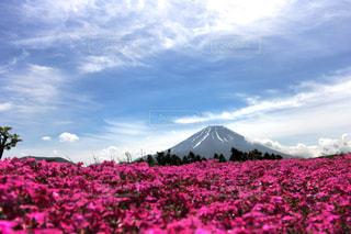 富士山の写真・画像素材[146638]
