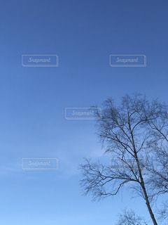 自然の写真・画像素材[296100]