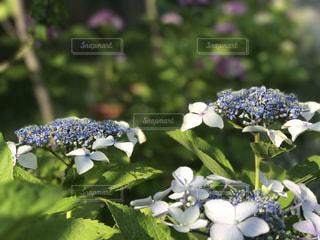 近くの花のアップの写真・画像素材[747398]