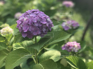 近くの花のアップの写真・画像素材[747399]