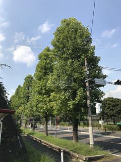街の一角の木の写真・画像素材[747406]