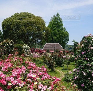 花園のクローズアップの写真・画像素材[3338376]