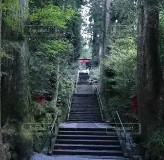 森の近くで列車の線路を下って移動する列車の写真・画像素材[3340263]