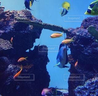 スイミングプールの水中眺めの写真・画像素材[3353349]