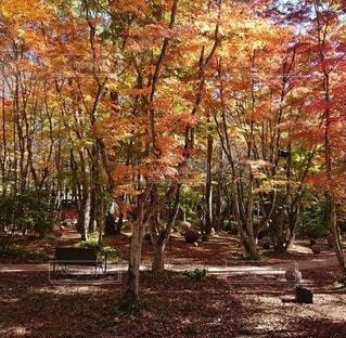 森の中の木の写真・画像素材[3353360]