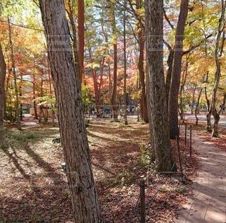 森林地帯の木の写真・画像素材[3353361]
