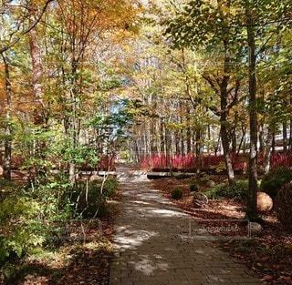 森の中の木の写真・画像素材[3353363]
