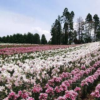 花園のクローズアップの写真・画像素材[3413825]