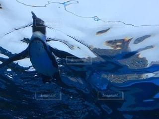空を飛んでいる鳥の写真・画像素材[3386830]