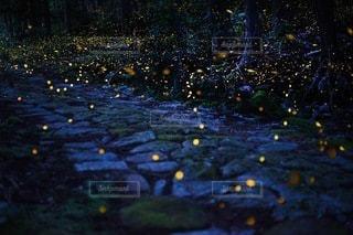 熊野古道石畳の上を飛ぶヒメボタルの写真・画像素材[3348567]