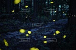 熊野古道とヒメボタルの写真・画像素材[3354592]