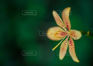 野の花の写真・画像素材[3600143]