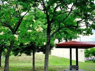 公園の大きな木の写真・画像素材[3369478]