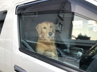 犬の写真・画像素材[3357077]