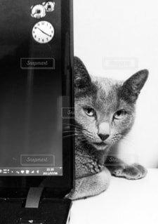 猫の写真・画像素材[3670603]