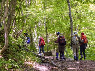 森の中の人々のグループの写真・画像素材[3688317]