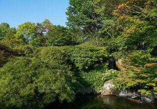 日本庭園の写真・画像素材[3710158]