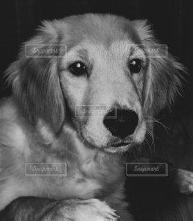 犬の写真・画像素材[4015666]