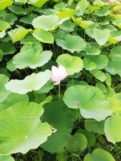 花のクローズアップの写真・画像素材[3367982]