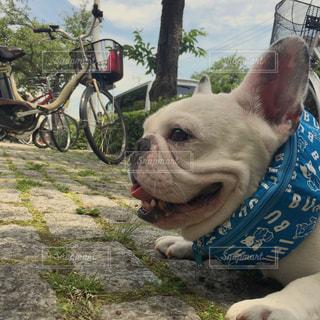 犬の写真・画像素材[140338]