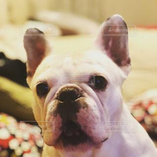 近くに犬のアップの写真・画像素材[1019119]