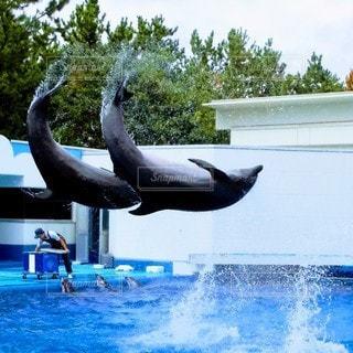 イルカの写真・画像素材[3356658]