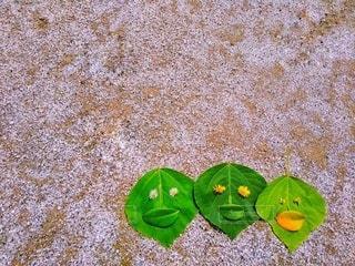 葉っぱの仲間♪の写真・画像素材[3387358]