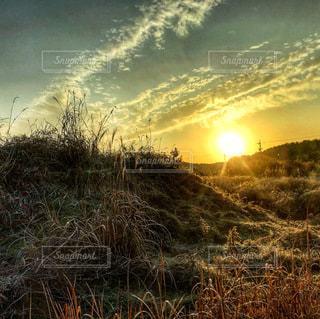 優しい朝陽の光🌅の写真・画像素材[3359406]