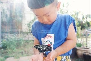 蝶々の写真・画像素材[3353908]